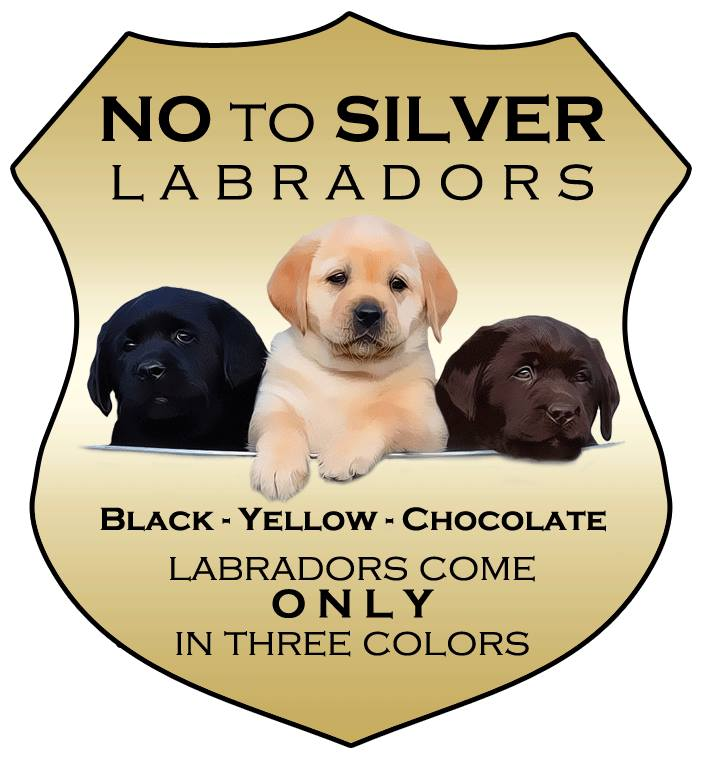 lab breeders in michigan
